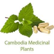 Khmer Medicinal Plants
